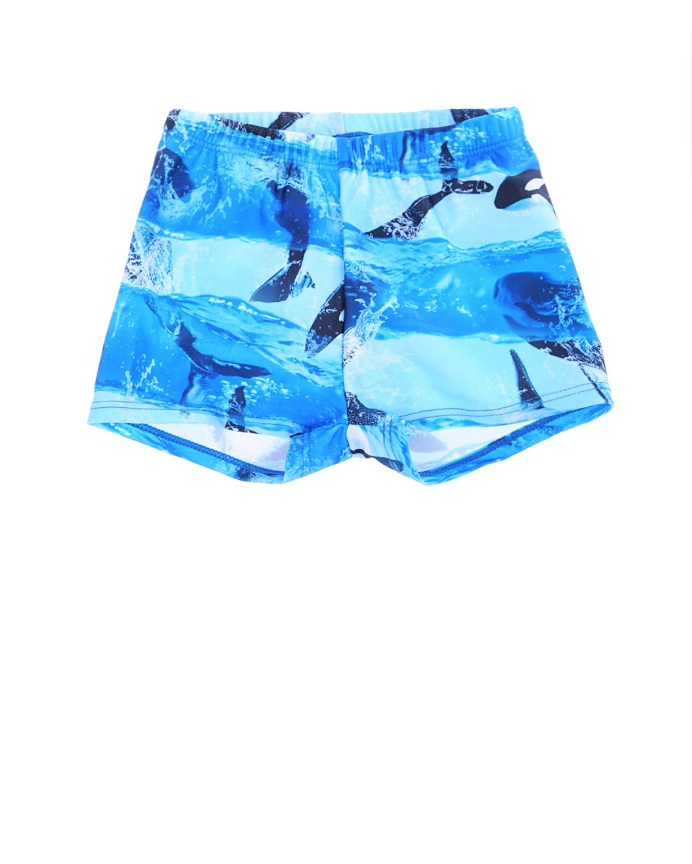 Купить Плавки-шорты Killer Whale, Molo