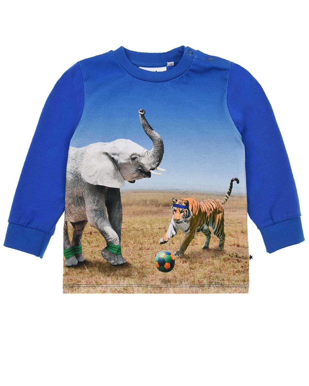 Купить Толстовка Eloy Go Tiger Molo детская, Синий, 95%хлопок+5%эластан